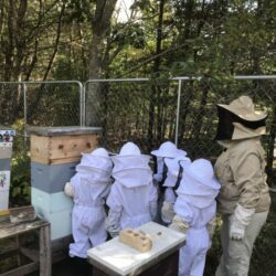 Georgetown Students Learn About Bees