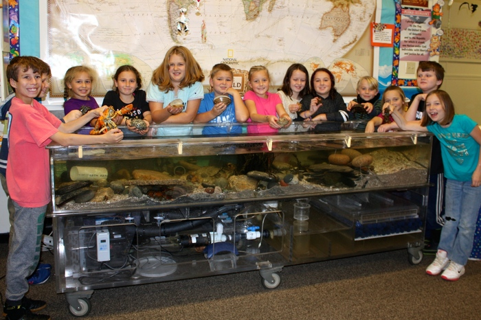 Grades 3/4 in front of their salt water touch tank.